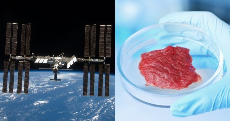 meat in space